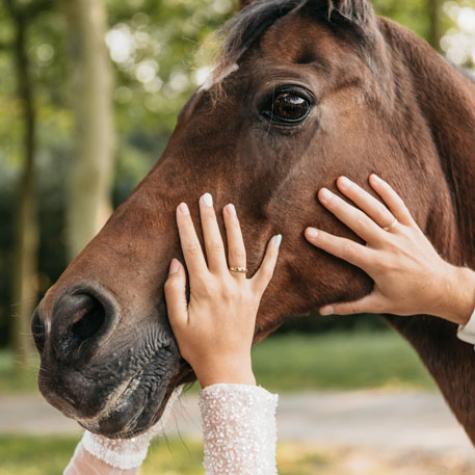 trouwfotograaf paard zeeland